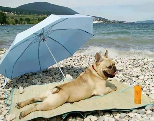 Macintosh HD:Users:brittanyloeffler:Downloads:Upwork:Beach:beach-bod-12098.jpg-65555.JPG