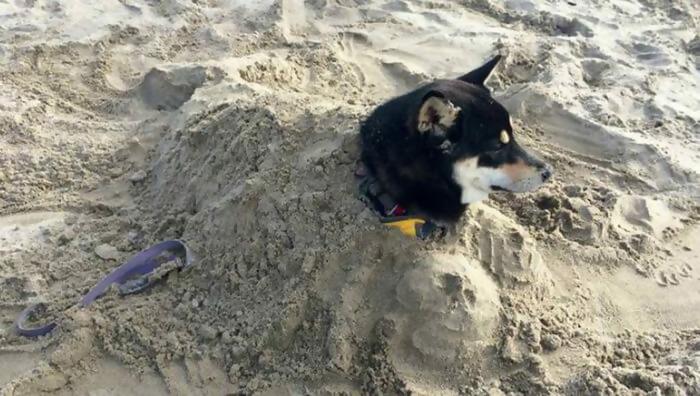 Macintosh HD:Users:brittanyloeffler:Downloads:Upwork:Beach:beach-dog-1324.jpg-41999.JPG