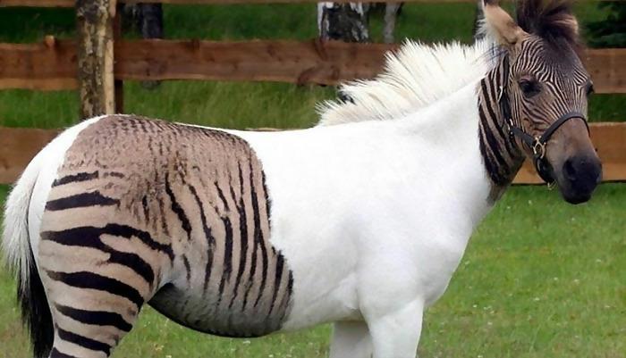 Macintosh HD:Users:brittanyloeffler:Downloads:Upwork:Hybrid Breeds:dino-animals.jpg