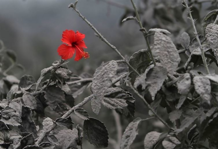 A single red flower sticking out amongst the charred black and white flora.