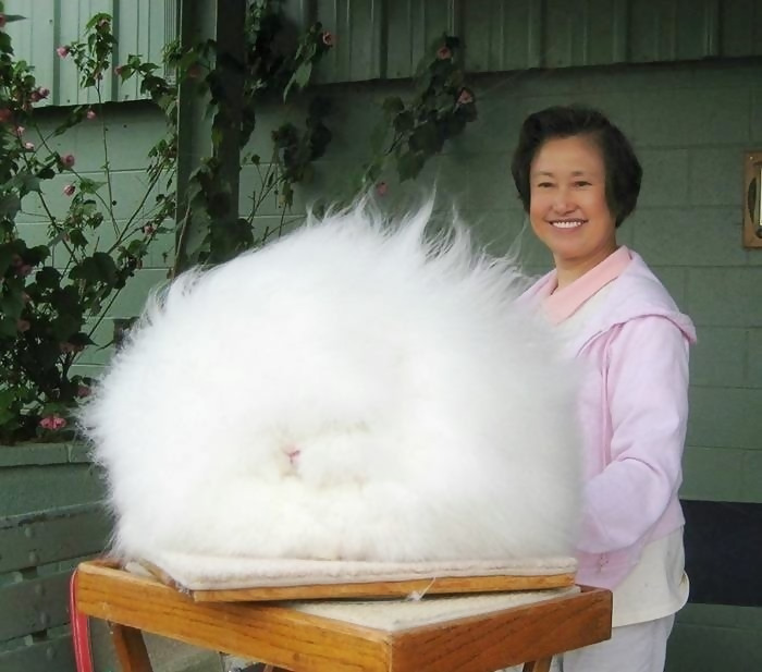 The world's fluffiest bunny - he's somewhere under there, we promise.