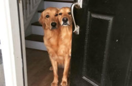 two dogs that look like one dog with two heads
