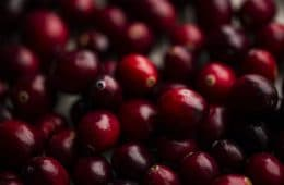shallow focus photography of red berry lot